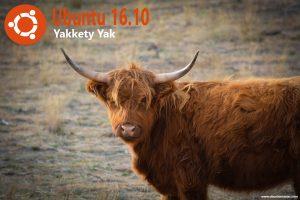 yak-597862_960_720 (1)